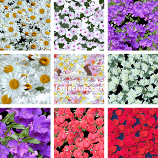 Flowers - Seamless Tiles and Individual Images