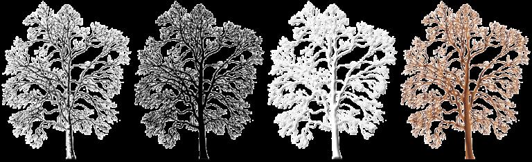 Graphic Winter Trees 250x305px (x4) - Plans Club Free